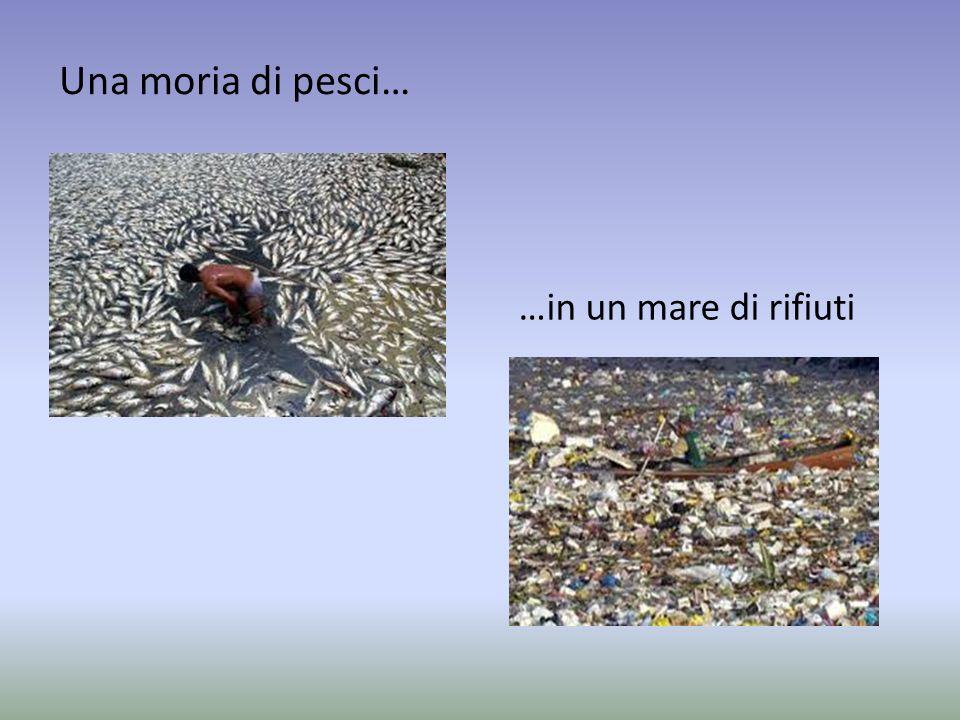 Una moria di pesci… …in un mare di rifiuti
