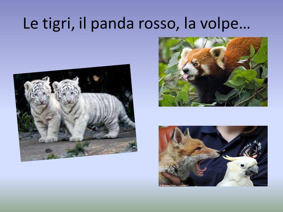 Le tigri, il panda rosso, la volpe…