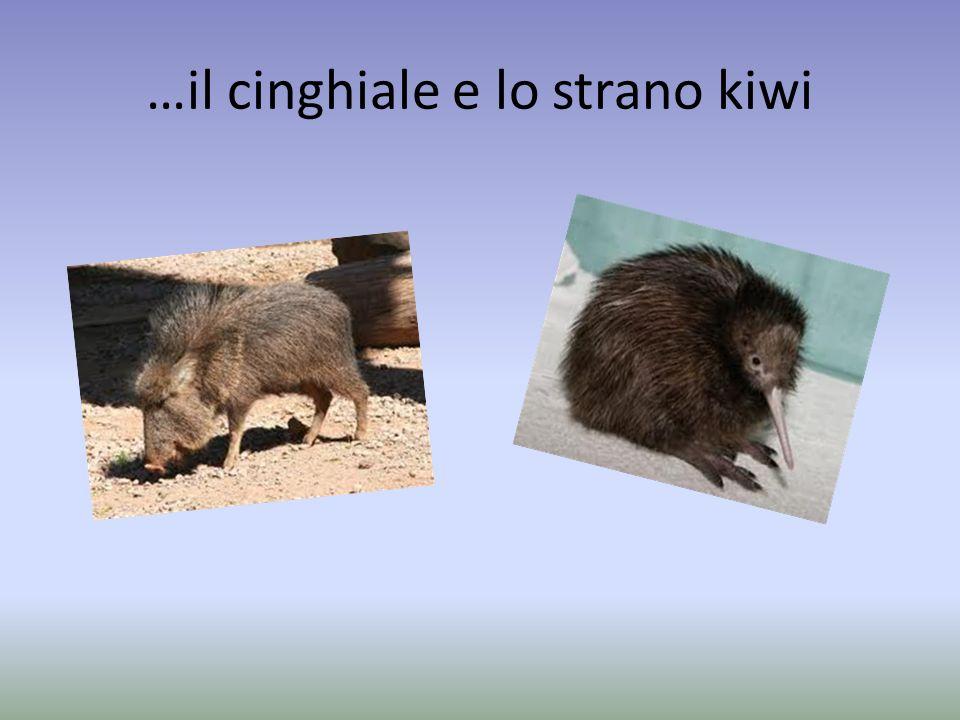 …il cinghiale e lo strano kiwi
