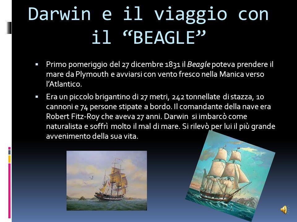 le abitudini di Darwin Darwin fin dall infanzia mostrò un grande interesse per la natura. Raccoglieva conchiglie e insetti. La passione per lentomolog