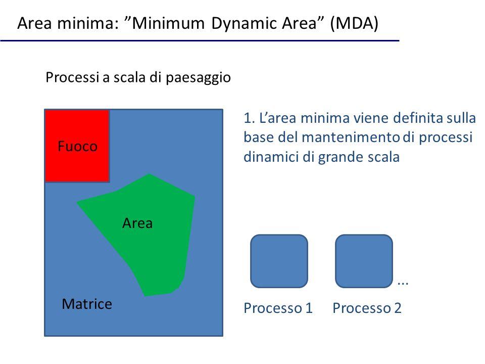 Processi a scala di paesaggio Area minima: Minimum Dynamic Area (MDA) Area Matrice 1. Larea minima viene definita sulla base del mantenimento di proce