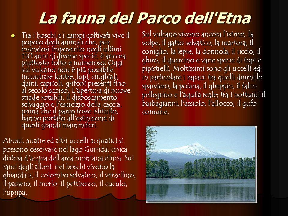 La fauna del Parco dell'Etna Tra i boschi e i campi coltivati vive il popolo degli animali che, pur essendosi impoverito negli ultimi 150 anni di dive