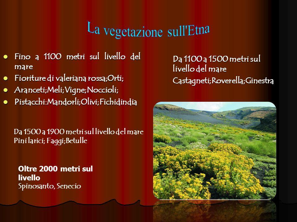 Fino a 1100 metri sul livello del mare Fino a 1100 metri sul livello del mare Fioriture di valeriana rossa;Orti; Fioriture di valeriana rossa;Orti; Ar