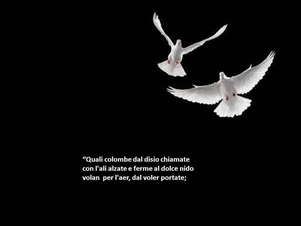 Quali colombe dal disio chiamate con l'ali alzate e ferme al dolce nido volan per l'aer, dal voler portate;