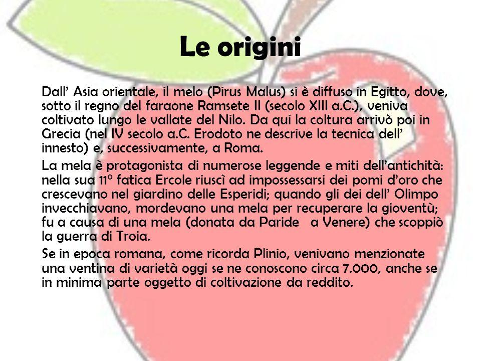 Le origini Dall Asia orientale, il melo (Pirus Malus) si è diffuso in Egitto, dove, sotto il regno del faraone Ramsete II (secolo XIII a.C.), veniva c