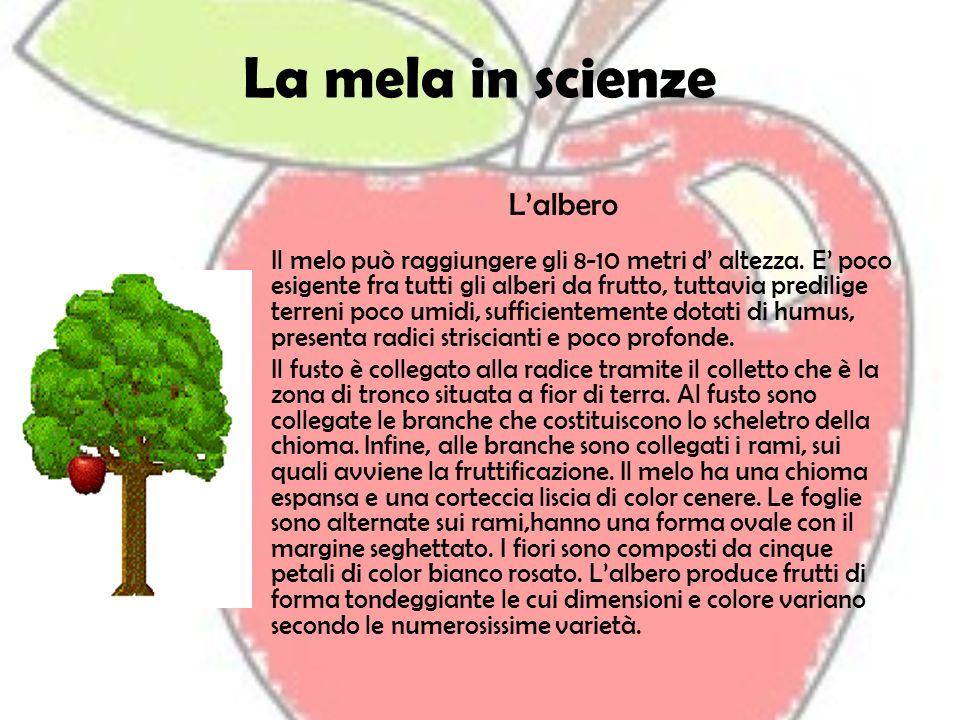 La mela in scienze Lalbero Il melo può raggiungere gli 8-10 metri d altezza. E poco esigente fra tutti gli alberi da frutto, tuttavia predilige terren