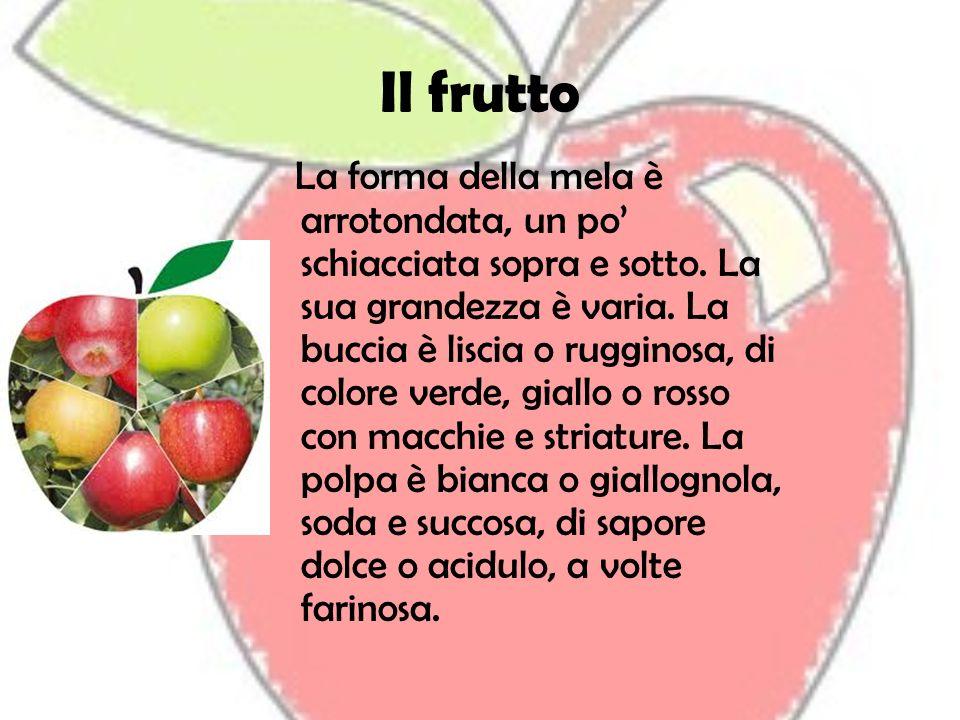 Il frutto La forma della mela è arrotondata, un po schiacciata sopra e sotto. La sua grandezza è varia. La buccia è liscia o rugginosa, di colore verd