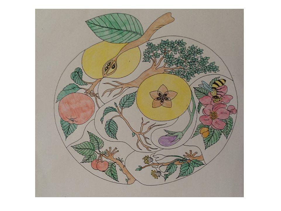 La mela nei proverbi Una mela al giorno toglie il medico di torno Il vecchio proverbio inglese mette in evidenza le proprietà curative e salutari della mela.