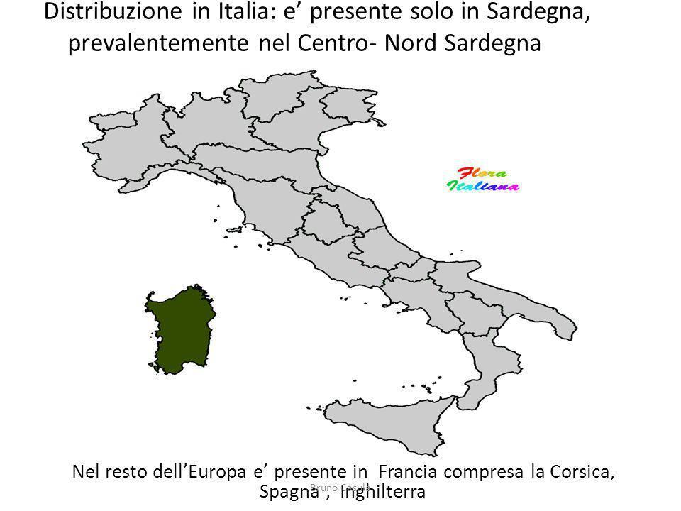 Distribuzione in Italia: e presente solo in Sardegna, prevalentemente nel Centro- Nord Sardegna Nel resto dellEuropa e presente in Francia compresa la