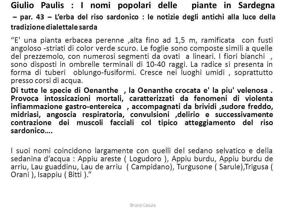 Giulio Paulis : I nomi popolari delle piante in Sardegna – par. 43 – Lerba del riso sardonico : le notizie degli antichi alla luce della tradizione di