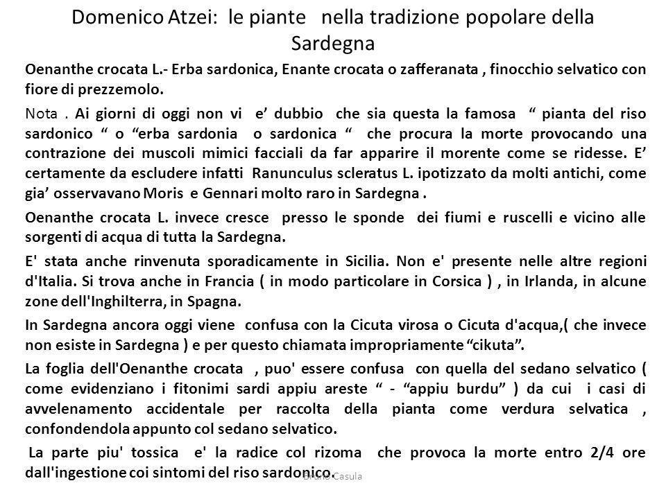 Domenico Atzei: le piante nella tradizione popolare della Sardegna Oenanthe crocata L.- Erba sardonica, Enante crocata o zafferanata, finocchio selvat