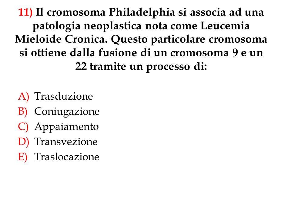 11) Il cromosoma Philadelphia si associa ad una patologia neoplastica nota come Leucemia Mieloide Cronica. Questo particolare cromosoma si ottiene dal