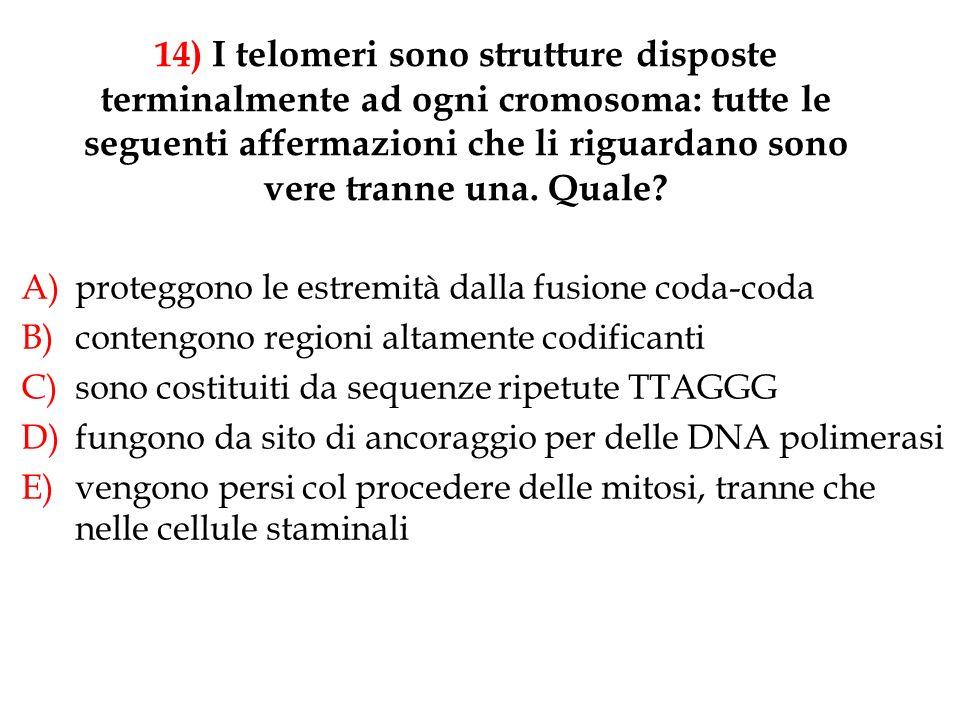 14) I telomeri sono strutture disposte terminalmente ad ogni cromosoma: tutte le seguenti affermazioni che li riguardano sono vere tranne una. Quale?