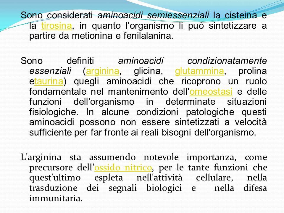 Sono considerati aminoacidi semiessenziali la cisteina e la tirosina, in quanto l'organismo li può sintetizzare a partire da metionina e fenilalanina.