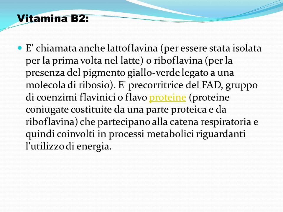 Vitamina B2: E' chiamata anche lattoflavina (per essere stata isolata per la prima volta nel latte) o riboflavina (per la presenza del pigmento giallo