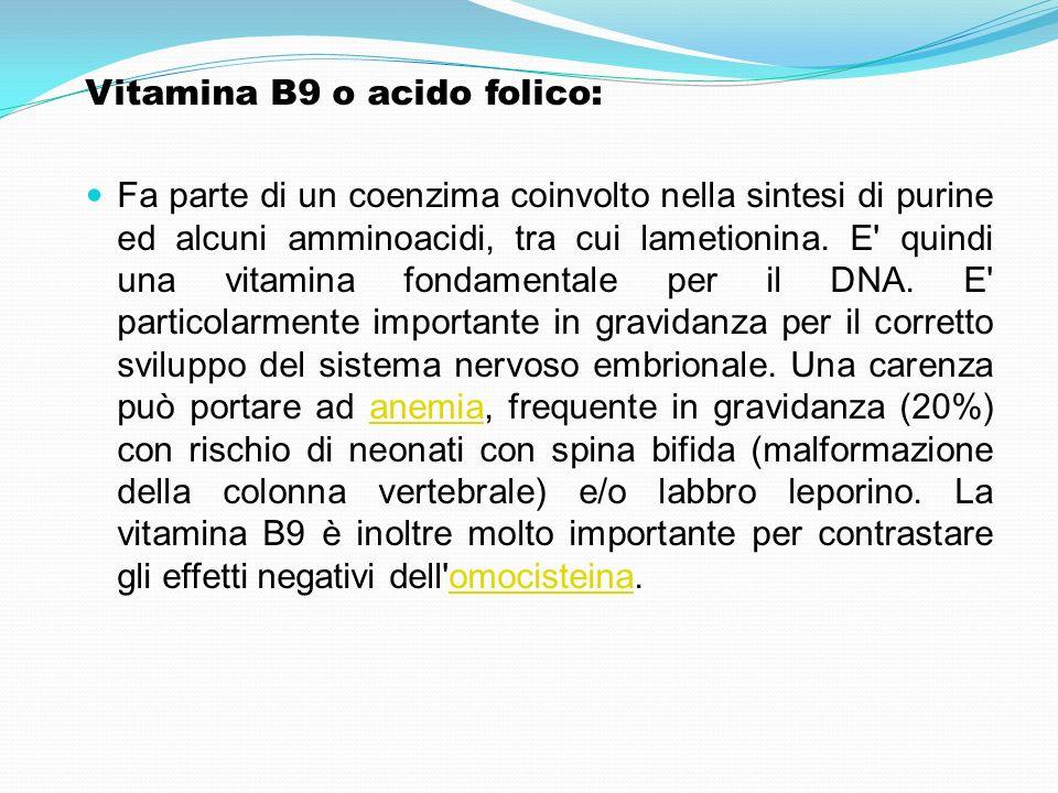 Vitamina B9 o acido folico: Fa parte di un coenzima coinvolto nella sintesi di purine ed alcuni amminoacidi, tra cui lametionina. E' quindi una vitami