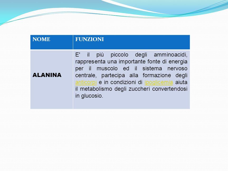 NOMEFUNZIONI ALANINA E' il più piccolo degli amminoacidi, rappresenta una importante fonte di energia per il muscolo ed il sistema nervoso centrale, p