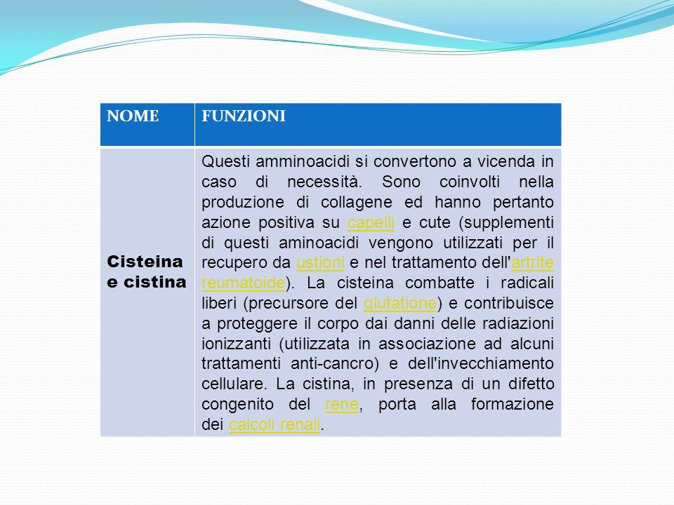 NOMEFUNZIONI Cisteina e cistina Questi amminoacidi si convertono a vicenda in caso di necessità. Sono coinvolti nella produzione di collagene ed hanno