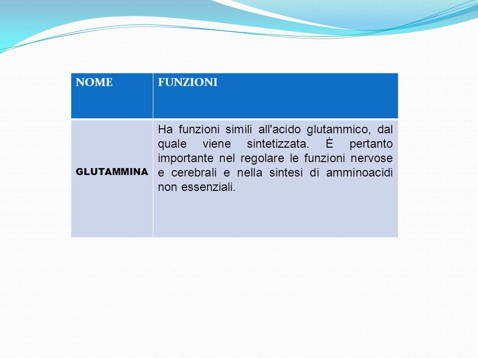 NOMEFUNZIONI GLUTAMMINA Ha funzioni simili all'acido glutammico, dal quale viene sintetizzata. È pertanto importante nel regolare le funzioni nervose