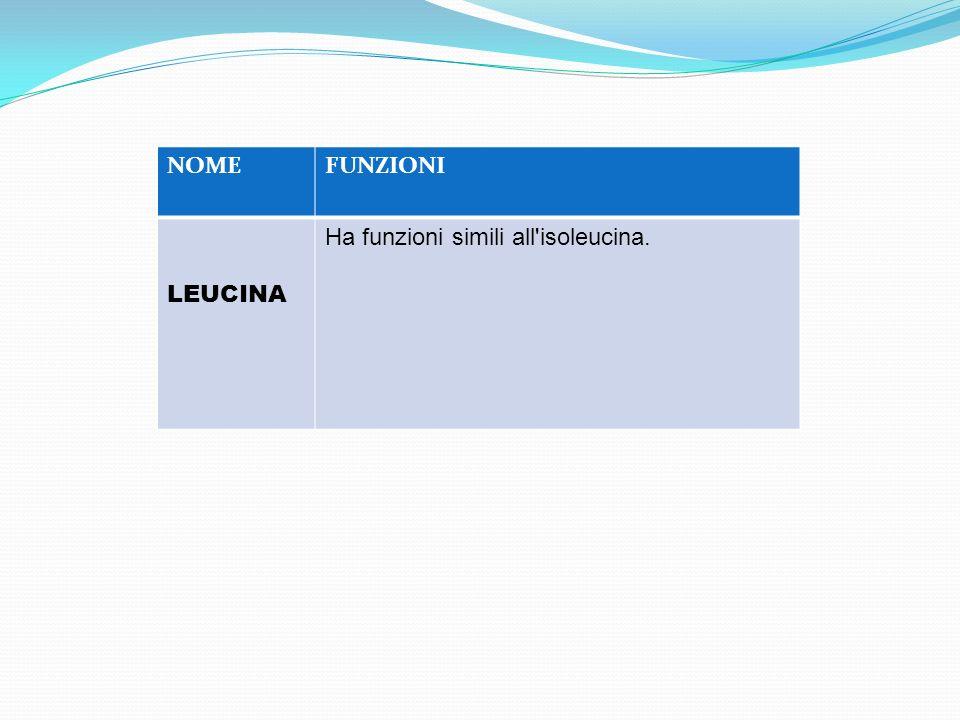 NOMEFUNZIONI LEUCINA Ha funzioni simili all'isoleucina.