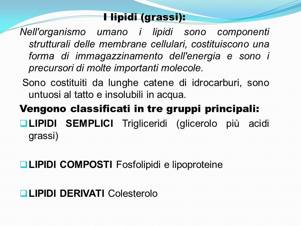 I lipidi (grassi): Nell'organismo umano i lipidi sono componenti strutturali delle membrane cellulari, costituiscono una forma di immagazzinamento del