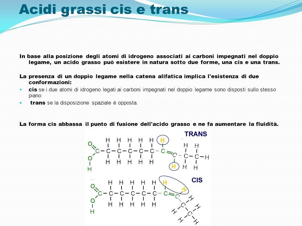 Acidi grassi cis e trans In base alla posizione degli atomi di idrogeno associati ai carboni impegnati nel doppio legame, un acido grasso può esistere