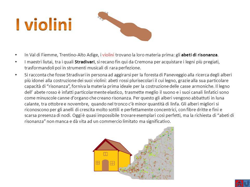 I violini In Val di Fiemme, Trentino-Alto Adige, i violini trovano la loro materia prima: gli abeti di risonanza. I maestri liutai, tra i quali Stradi