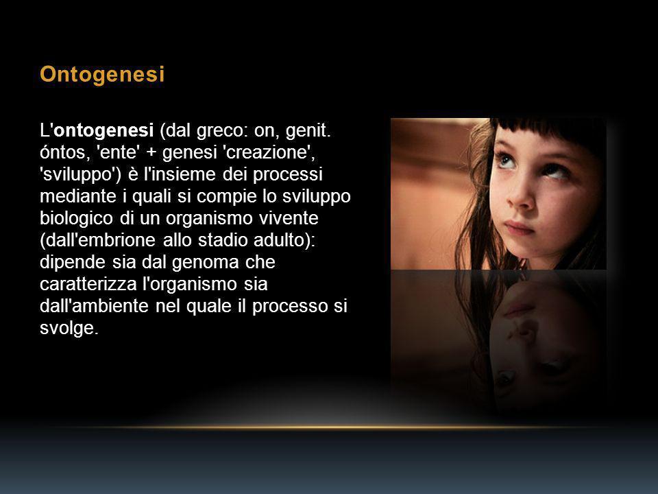 Ontogenesi L ontogenesi (dal greco: on, genit.