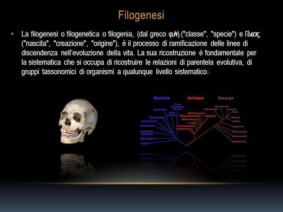 Filogenesi La filogenesi o filogenetica o filogenia, (dal greco φυλή ( classe , specie ) e Γένεσις ( nascita , creazione , origine ), è il processo di ramificazione delle linee di discendenza nellevoluzione della vita.