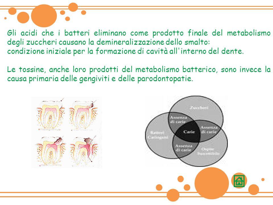 Gli acidi che i batteri eliminano come prodotto finale del metabolismo degli zuccheri causano la demineralizzazione dello smalto: condizione iniziale per la formazione di cavità all interno del dente.