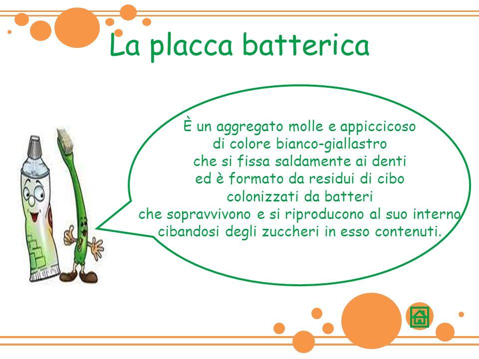 La placca batterica È un aggregato molle e appiccicoso di colore bianco-giallastro che si fissa saldamente ai denti ed è formato da residui di cibo colonizzati da batteri che sopravvivono e si riproducono al suo interno cibandosi degli zuccheri in esso contenuti.
