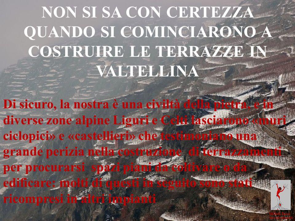 Michela Zucca Servizi culturali NON SI SA CON CERTEZZA QUANDO SI COMINCIARONO A COSTRUIRE LE TERRAZZE IN VALTELLINA Di sicuro, la nostra è una civiltà