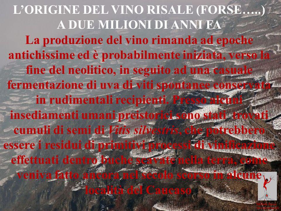 Michela Zucca Servizi culturali LORIGINE DEL VINO RISALE (FORSE…..) A DUE MILIONI DI ANNI FA La produzione del vino rimanda ad epoche antichissime ed