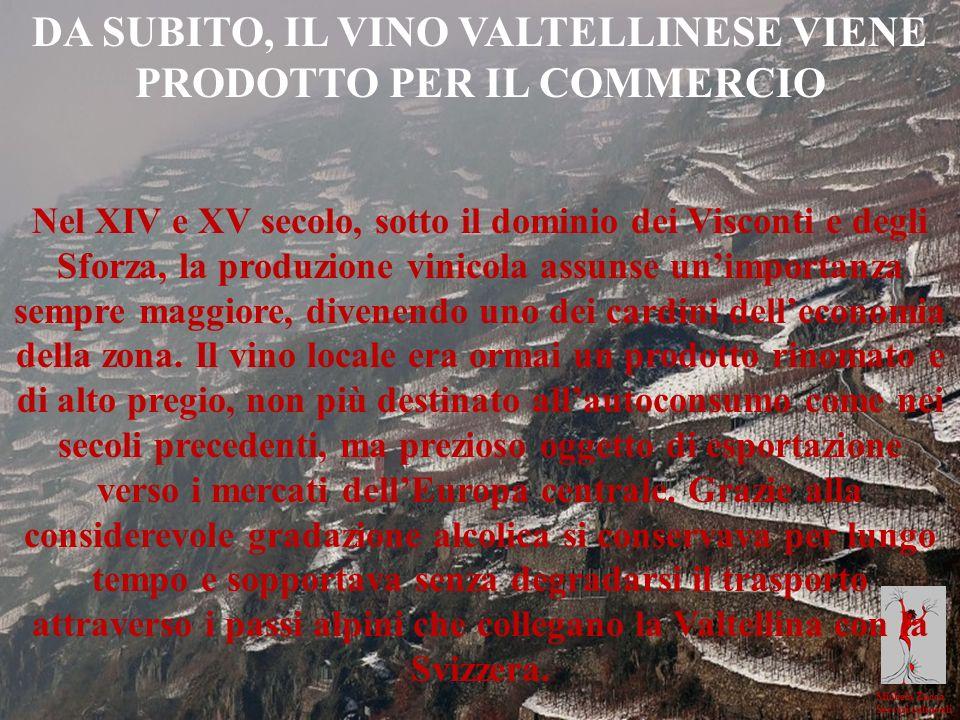 Michela Zucca Servizi culturali DA SUBITO, IL VINO VALTELLINESE VIENE PRODOTTO PER IL COMMERCIO Nel XIV e XV secolo, sotto il dominio dei Visconti e d