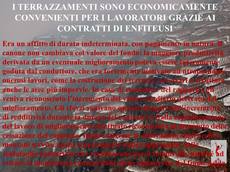 Michela Zucca Servizi culturali I TERRAZZAMENTI SONO ECONOMICAMENTE CONVENIENTI PER I LAVORATORI GRAZIE AI CONTRATTI DI ENFITEUSI Era un affitto di du