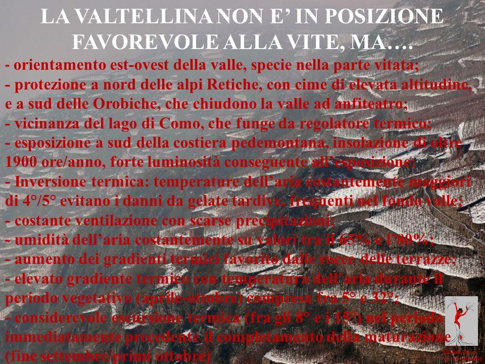 Michela Zucca Servizi culturali LA VALTELLINA NON E IN POSIZIONE FAVOREVOLE ALLA VITE, MA…. - orientamento est-ovest della valle, specie nella parte v