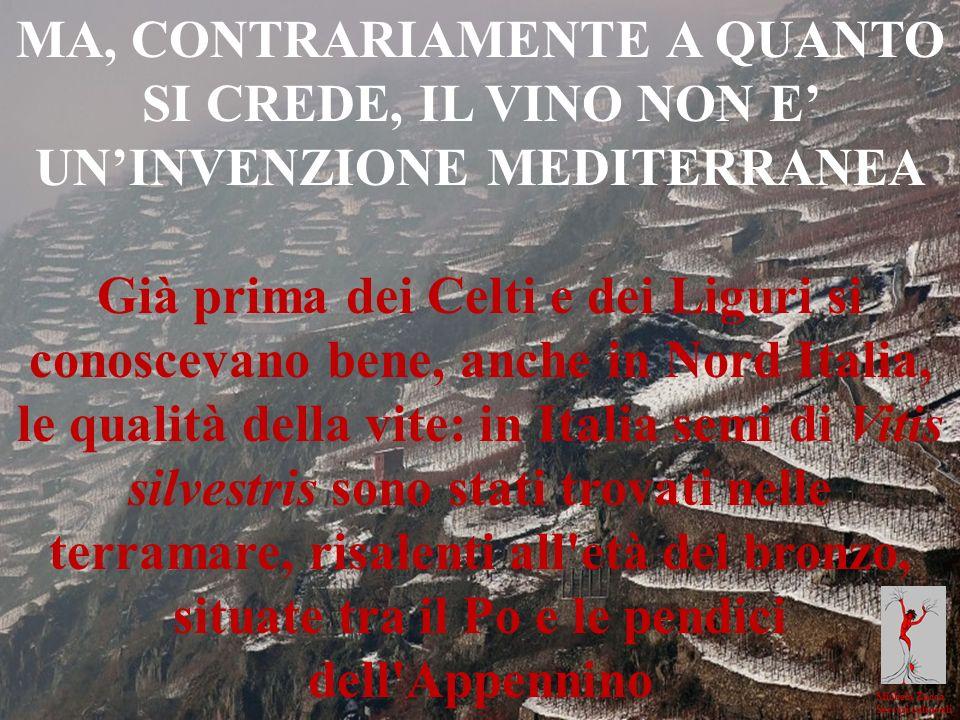 Michela Zucca Servizi culturali MA, CONTRARIAMENTE A QUANTO SI CREDE, IL VINO NON E UNINVENZIONE MEDITERRANEA Già prima dei Celti e dei Liguri si cono
