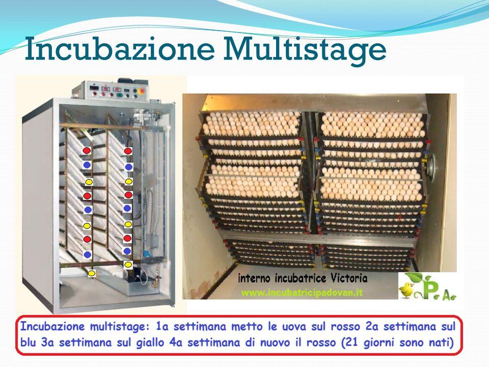 Incubazione Multistage