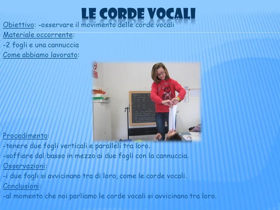 Obiettivo: -osservare il movimento delle corde vocali Materiale occorrente: -2 fogli e una cannuccia Come abbiamo lavorato: Procedimento: -tenere due fogli verticali e paralleli tra loro.