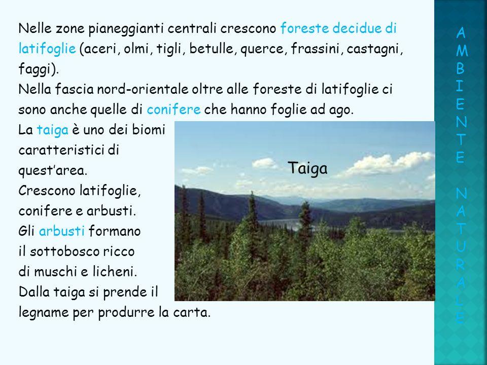 Nelle zone pianeggianti centrali crescono foreste decidue di latifoglie (aceri, olmi, tigli, betulle, querce, frassini, castagni, faggi). Nella fascia