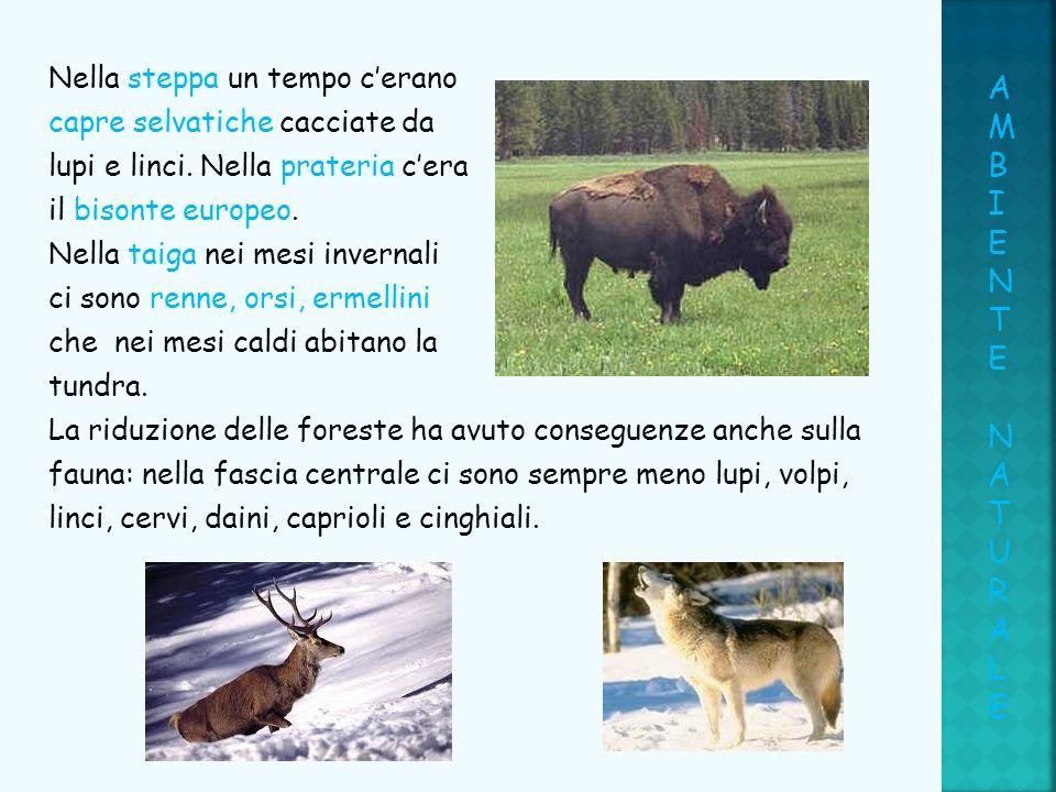Nella steppa un tempo cerano capre selvatiche cacciate da lupi e linci. Nella prateria cera il bisonte europeo. Nella taiga nei mesi invernali ci sono
