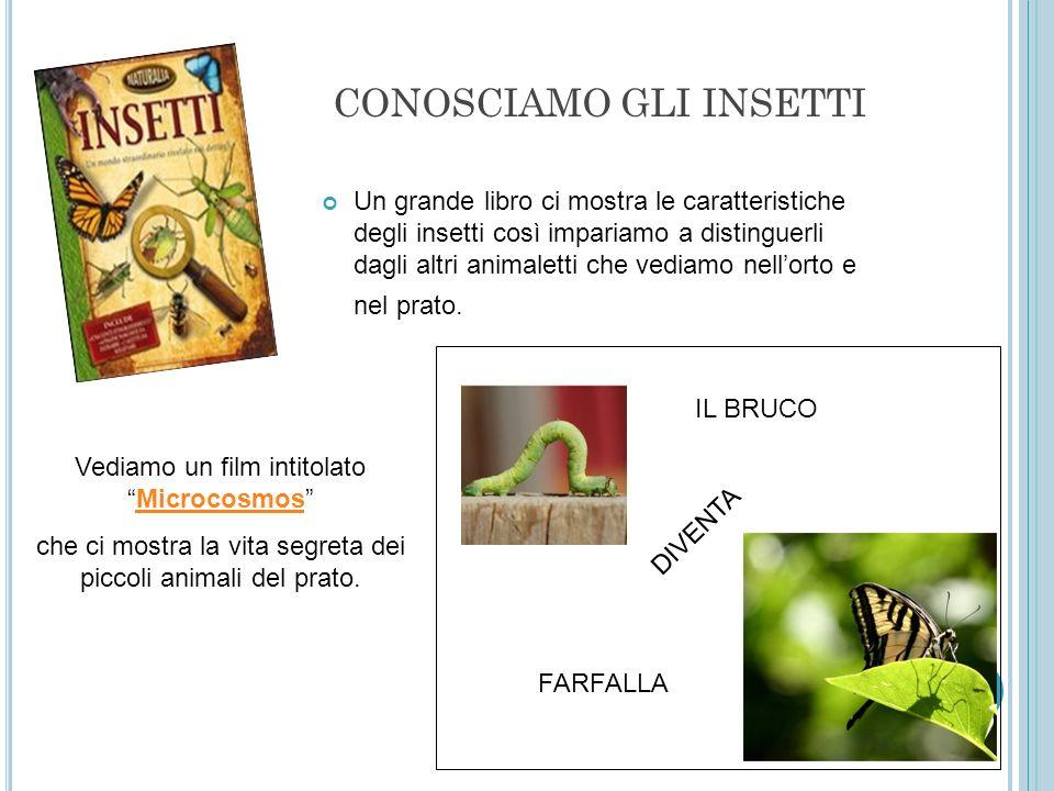 CONOSCIAMO GLI INSETTI Un grande libro ci mostra le caratteristiche degli insetti così impariamo a distinguerli dagli altri animaletti che vediamo nel