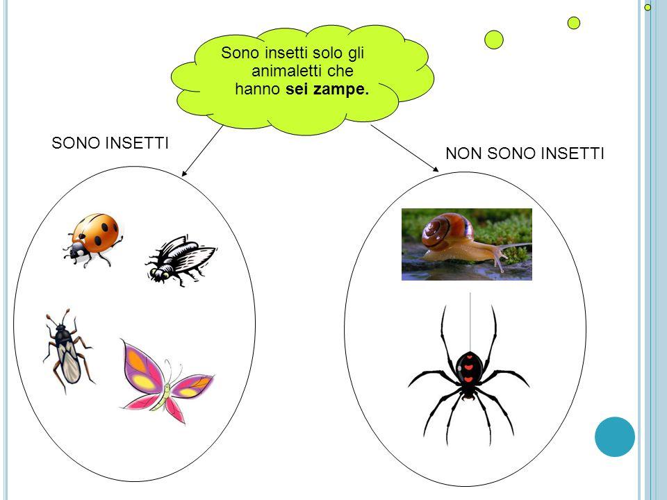 Sono insetti solo gli animaletti che hanno sei zampe. SONO INSETTI NON SONO INSETTI