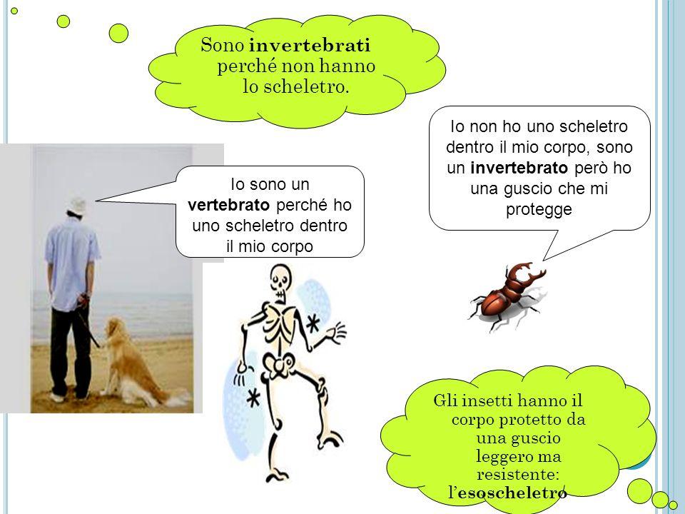 Sono invertebrati perché non hanno lo scheletro. Io sono un vertebrato perché ho uno scheletro dentro il mio corpo Io non ho uno scheletro dentro il m