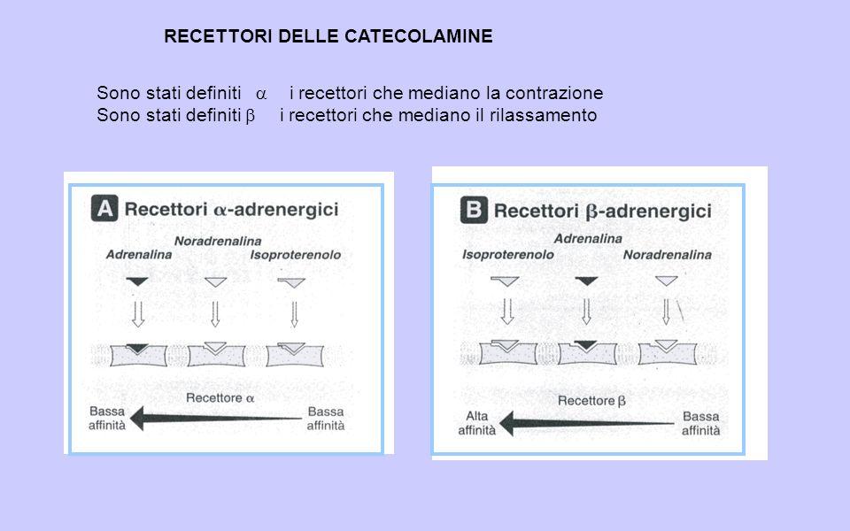 RECETTORI DELLE CATECOLAMINE Sono stati definiti i recettori che mediano la contrazione Sono stati definiti i recettori che mediano il rilassamento