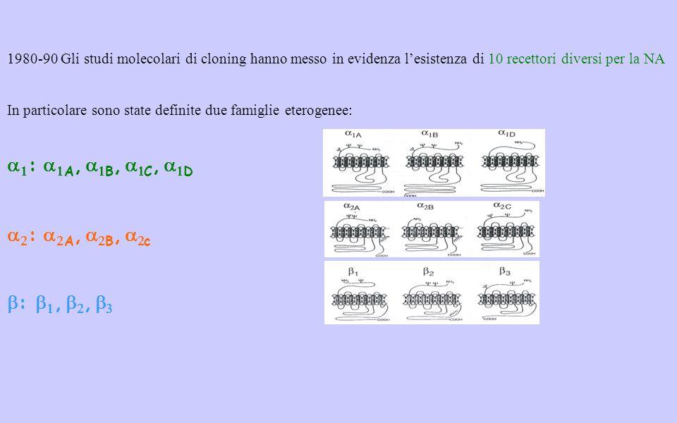 1980-90 Gli studi molecolari di cloning hanno messo in evidenza lesistenza di 10 recettori diversi per la NA In particolare sono state definite due famiglie eterogenee: : A, B, C, D : A, B, c :,,