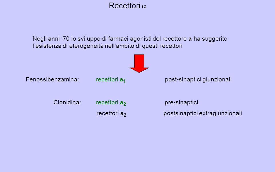Negli anni 70 lo sviluppo di farmaci agonisti del recettore a ha suggerito lesistenza di eterogeneità nellambito di questi recettori Fenossibenzamina: recettori a 1 post-sinaptici giunzionali Clonidina: recettori a 2 pre-sinaptici recettori a 2 postsinaptici extragiunzionali Recettori