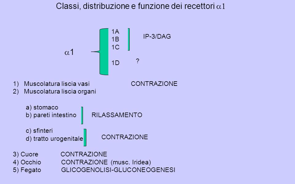 Classi, distribuzione e funzione dei recettori 1 1A 1B 1C 1D IP-3/DAG .