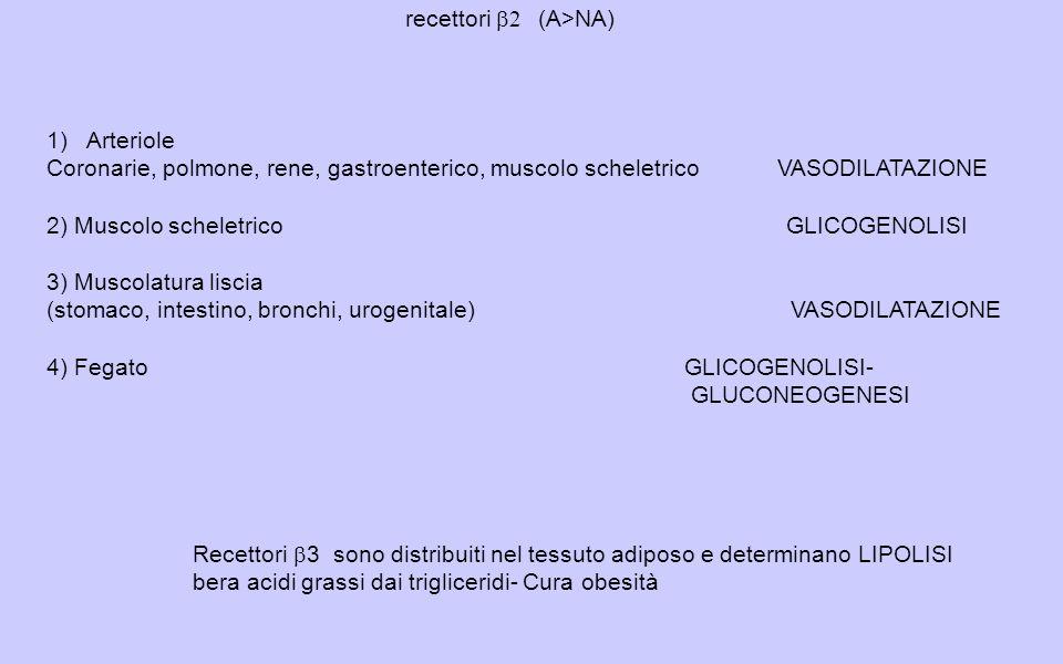 recettori 2 (A>NA) Recettori 3 sono distribuiti nel tessuto adiposo e determinano LIPOLISI bera acidi grassi dai trigliceridi- Cura obesità 1)Arteriole Coronarie, polmone, rene, gastroenterico, muscolo scheletrico VASODILATAZIONE 2) Muscolo scheletrico GLICOGENOLISI 3) Muscolatura liscia (stomaco, intestino, bronchi, urogenitale)VASODILATAZIONE 4) FegatoGLICOGENOLISI- GLUCONEOGENESI