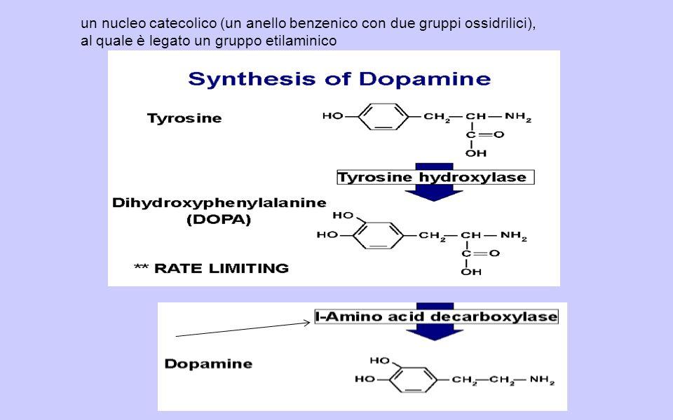un nucleo catecolico (un anello benzenico con due gruppi ossidrilici), al quale è legato un gruppo etilaminico